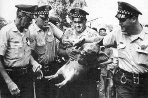"Four police officers surround a pig, held by one of the officers. The protestors had brought the pig and dubbed it ""Pigasus,"" nominating it as their candidate for President of the U."